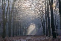 Morninglight, das durch Reif-bedeckte Bäume in Nationa bricht lizenzfreie stockfotografie