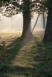 Morninglight. Trees, grass, rope in the light of an early morning royalty free stock photography