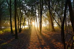 Morningsun in foresta olandese immagini stock libere da diritti