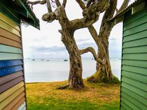 Moonah tree and beach box Royalty Free Stock Images