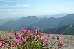 Moro Rock, secoya y parque nacional de reyes Canyon, California fotografía de archivo libre de regalías