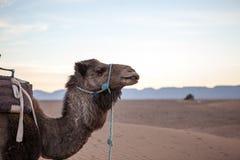 Morocan deser Obraz Royalty Free