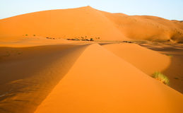 moroccan дюны пустыни предпосылки Стоковая Фотография RF