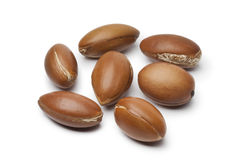 Moroccan Argan nuts stock photos