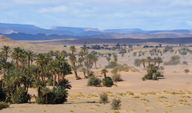 Moroccan Desert Landscape. Desert landscape with palmtrees in Southern Morocco Stock Images