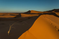 Moroccan desert landscape with blue sky. Dunes background. Stock Images