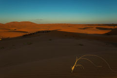 Moroccan desert landscape with blue sky. Dunes background. Royalty Free Stock Photos
