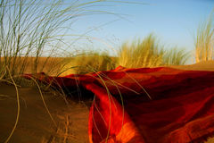 Moroccan desert scenery with desert grass plantation and ornametal red blanket, dunes on the horizon and neverending footsteps on Stock Photography