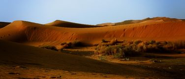 A moroccan desert scenery with sand dunes and desert grass plant Royalty Free Stock Photos