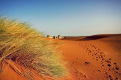 A moroccan desert scenery with sand dunes, desert grass plantati Royalty Free Stock Photography