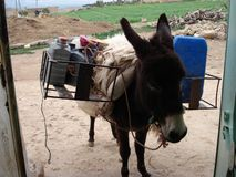 Moroccan donkey royalty free stock photos