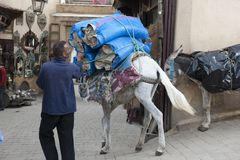 Man leading donkey through Medina of Fez Royalty Free Stock Photo