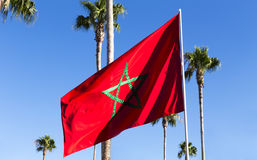 Moroccan flag flying amongst palm trees stock photos