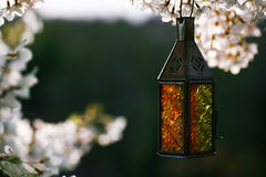 Moroccan glass and metal lanterns lamps  with blossom cherry flo Stock Photo