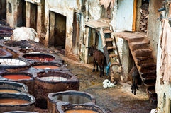 Leather factories, ancient craft in Medina of Fes Stock Photography