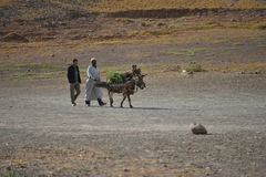Moroccan lifestyle, men with donkey Stock Photography
