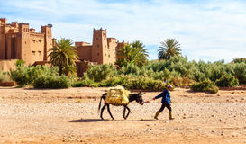Moroccan Man Walking with Mule past Ait Benhaddou Royalty Free Stock Photo