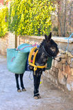 Moroccan mule Stock Photography