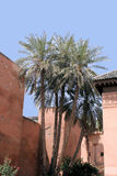 Moroccan palms Royalty Free Stock Photography