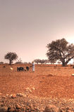 Moroccan pasture Royalty Free Stock Photo