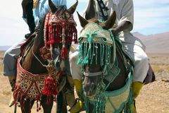 Moroccan riders Royalty Free Stock Photos