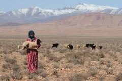 moroccan sheepherder royaltyfria bilder