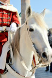 Moroccan soldier on the horse Royalty Free Stock Image