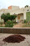 Moroccan village. View at the stack with argan nuts Stock Photography