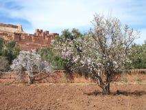 morocco fotografia stock