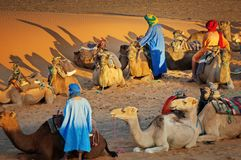 Morocco Berbers in the desert - camel safari, dromadaires trekking tour. Camels and Berbers in the Sahara desert at sunset after the trekking tour safari royalty free stock photos