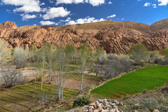Morocco Dades valley agricultural fields Stock Image