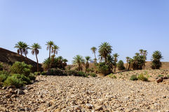 Morocco, Draa Valley, oasis Royalty Free Stock Photography