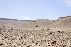 Morocco, Draa valley, Stone desert and acacia tree Royalty Free Stock Images