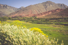 Morocco, High Atlas Mountains, Agricultural land on the fertile Stock Images
