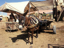 Morocco market Royalty Free Stock Photography