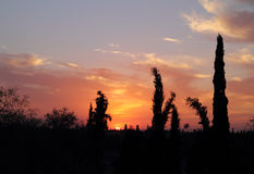 Morocco, Marrakesh, cypress trees against sunset backdrop Stock Images