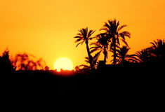 Morocco, Marrakesh, Silhouette of palm trees at sunset. Stock Photography