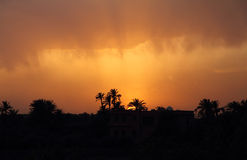 Morocco, Marrakesh, Silhouette of palm trees at sunset. Royalty Free Stock Photo