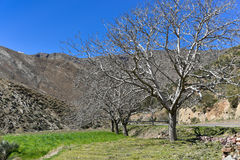 Morocco nature early spring Stock Photography