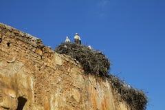 Morocco. Rabat. Storks on necropolis ruins Shells Stock Photos