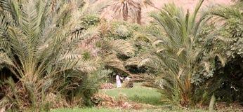Morocco river valley Stock Photos
