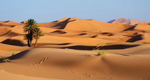 Morocco. Sand dunes of Sahara desert Stock Photos