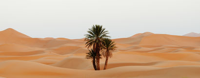 Morocco. Sand dunes of Sahara desert Stock Photography