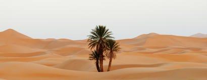 Morocco. Sand dunes of Sahara desert Stock Photography