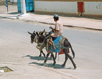 Morocco, two donkey and rider Stock Photo