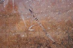 Moroccon-Fossilien in Erfoud, Marokko Stockfoto