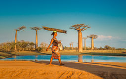 MORONDAVA, MADAGASCAR - September, 15, 2014: Weg van de Baobabs Royalty-vrije Stock Afbeelding