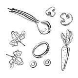Morot-, lök-, champinjon- och persiljagrönsaker Arkivfoto