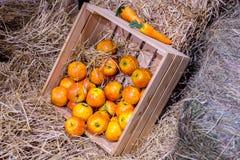 Morotsfärgade äpplen i träask på höet royaltyfri fotografi
