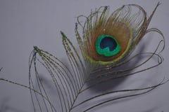 morpankh de la pluma del pavo real de las alas del pavo real foto de archivo libre de regalías